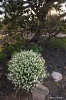Cedar Mesa, Cedar Mesa landscape, SE Utah