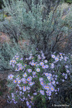 Canyonlands NP,Canyonlands National Park,fall flowers