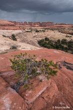 Canyonlands National Park,Needles