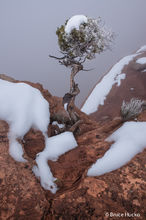 Canyonlands NP,canyonlands fog