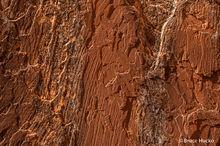 Hunter's Canyon, Moab, Moab area, Moab area BLM, Moab area non NPS, SE Utah, slickrock