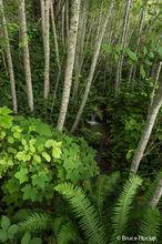 Redwoods, Redwoods NP, road trip 2016