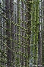 Oregon Coast, road trip 2016