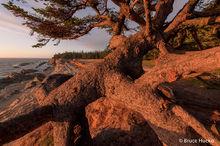 Coast Trip 2016, Oregon Coast, Shore Acres State Park, road trip 2016