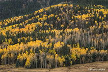 Colorado,Colorado Fall Color,San Juan Mtns.