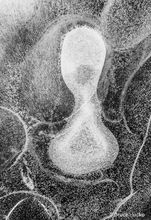 Ice Embryo