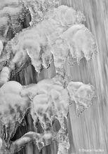 Ice Buffalo