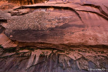 Escalante,Grand Staircase-Escalante NM,Peek-a-Boo Canyon,Willow Canyon