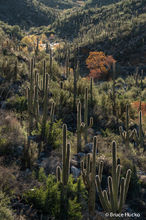 Bear Canyon,Sabino Canyon,Sabino Recreation Area,Sonoran Desert,Tucson area