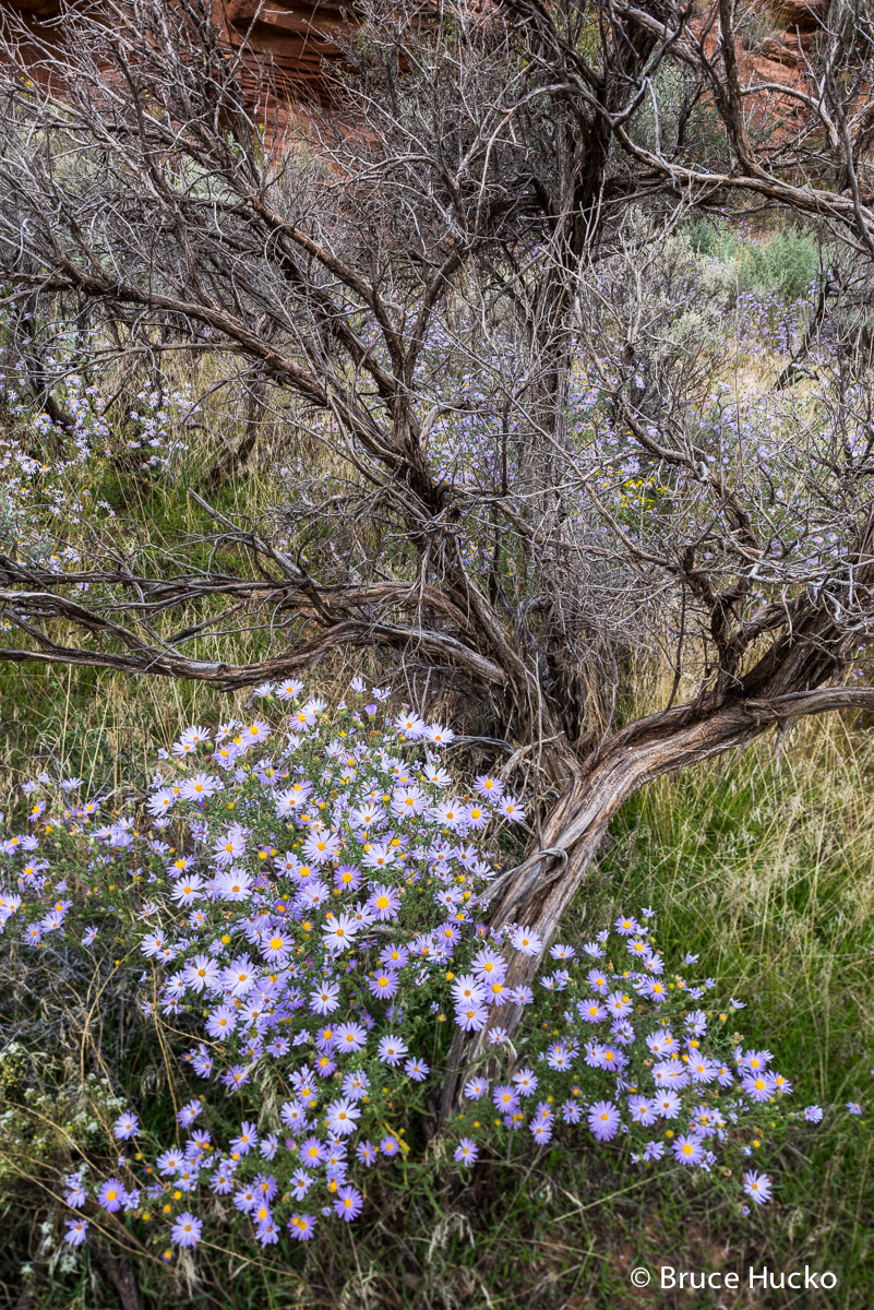 Canyonlands NP,Canyonlands National Park,fall flowers, photo