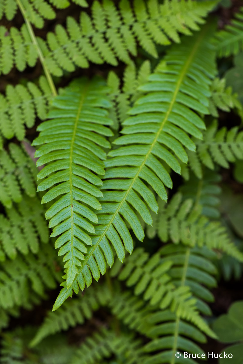 Redwoods, Redwoods NP, road trip 2016, photo