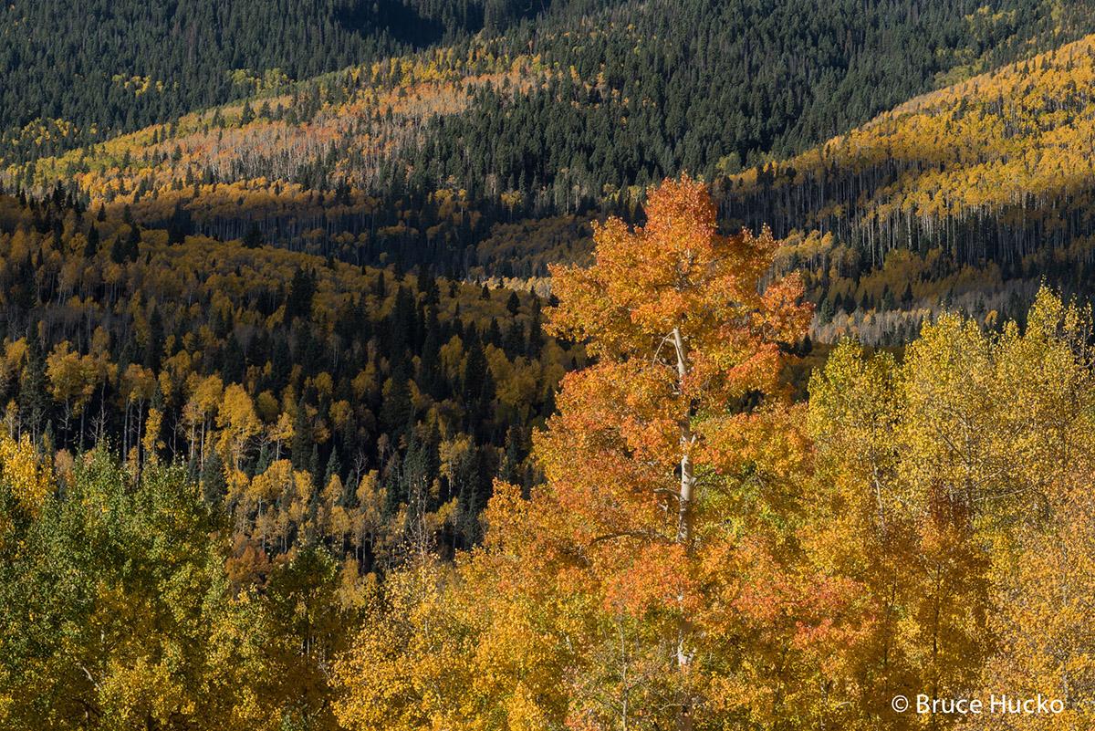 Colorado,Colorado Fall Color,San Juan Mtns.