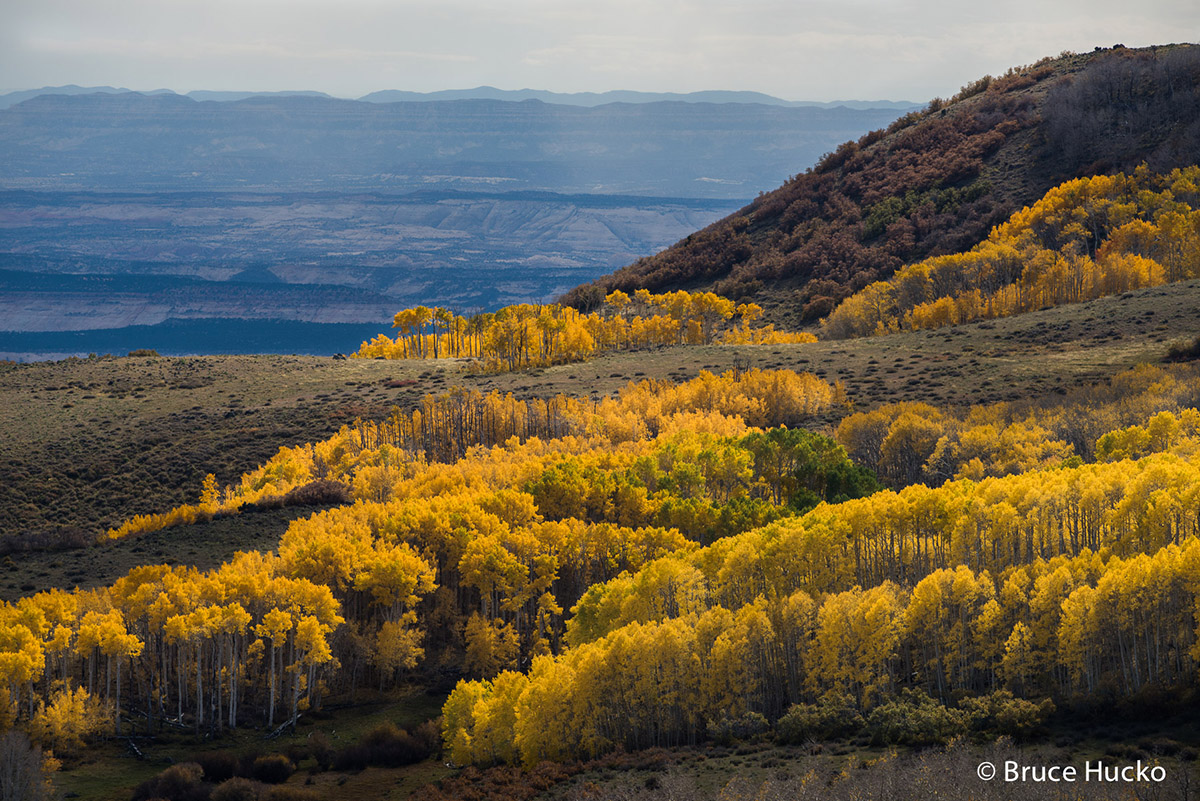 Escalante,Fall Colors,boulder mtn, photo