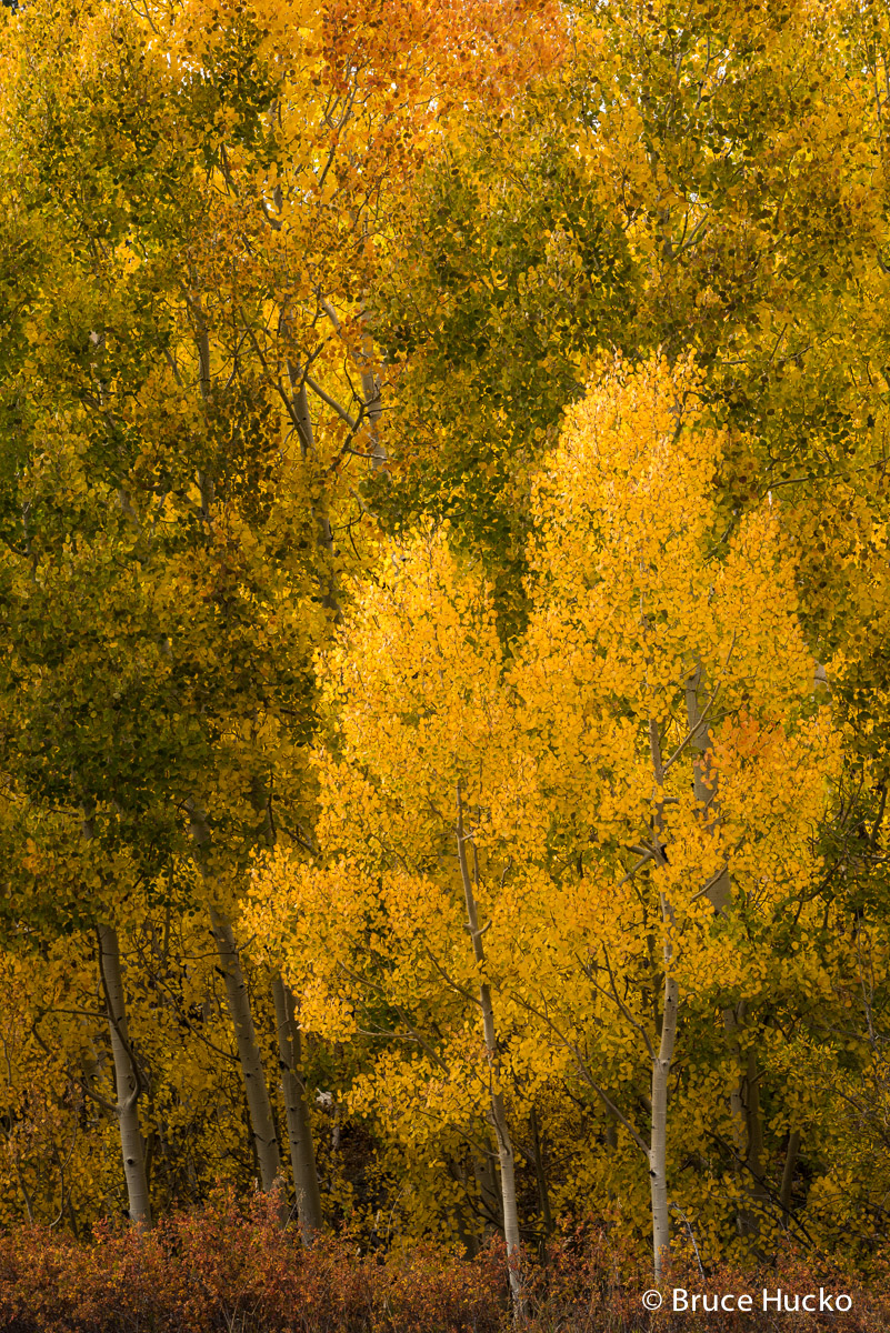 Escalante,Fall Colors,boulder mtn, photo