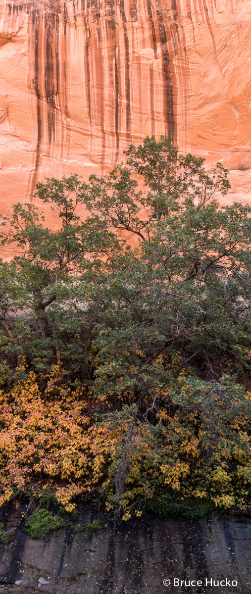 Escalante,Grand Staircase-Escalante NM,Peek-a-Boo Canyon,Willow Canyon, photo