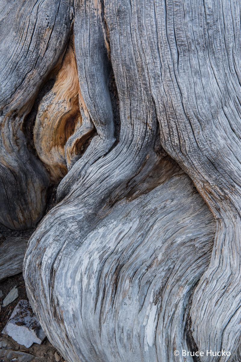 Great Basin NP,Nevada,Nevada landscape bristlecone pine, photo