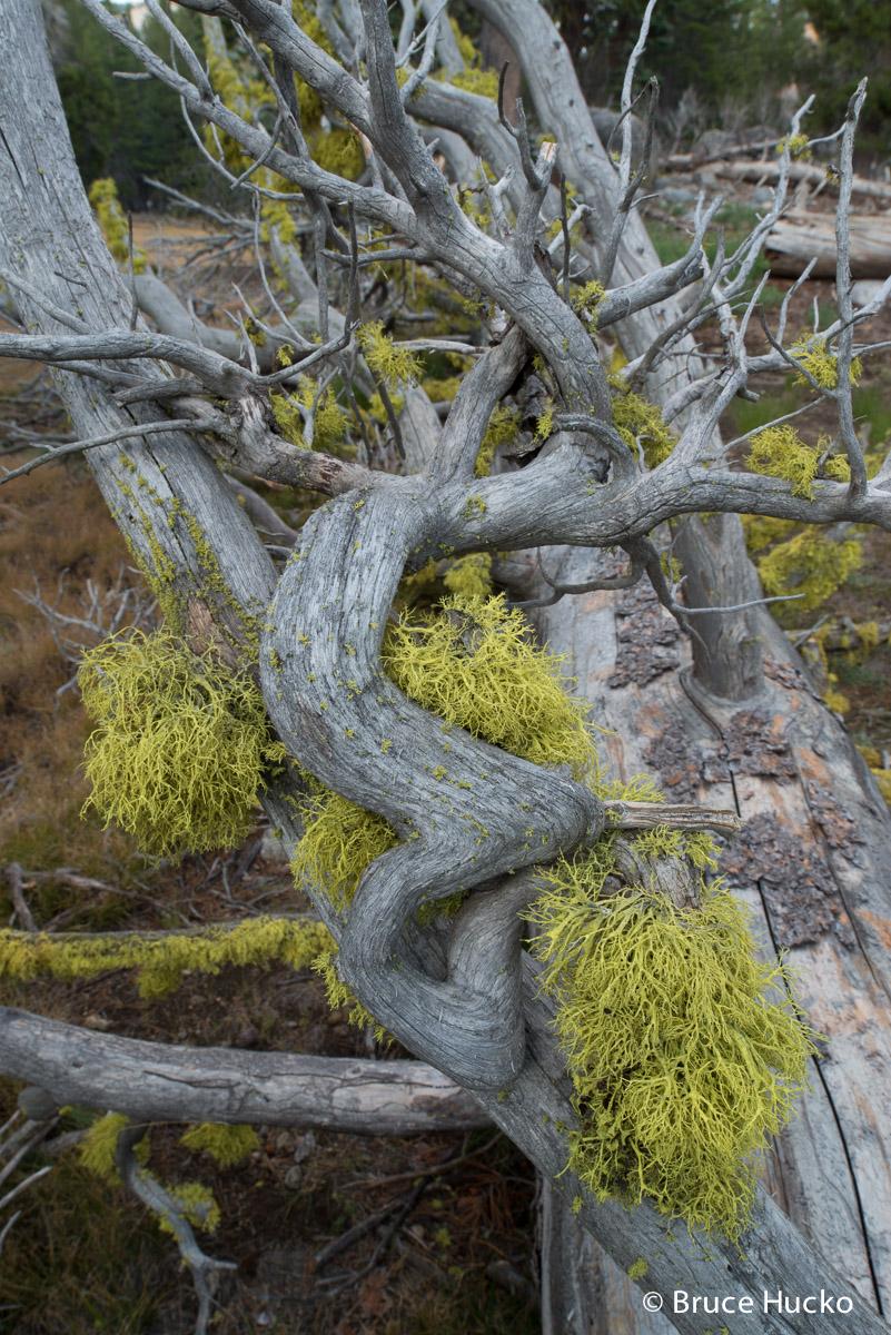 Coast Trip 2014,Highway 50,Horsetail Falls,Nevada,Nevada landscape,Salt Point State Park, photo