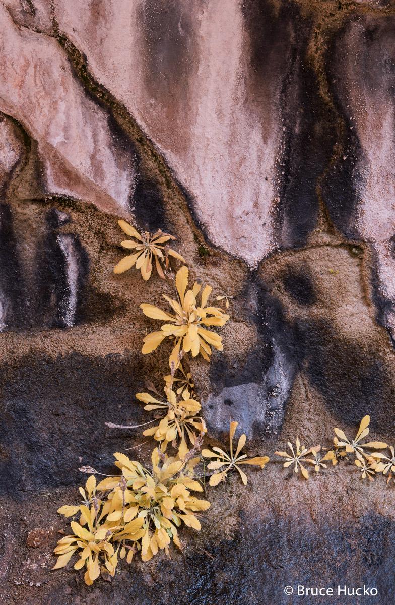 Hunter's Canyon,Moab area,Moab area BLM,Moab area colorado plateau, photo
